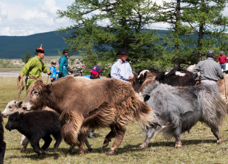 The Sustainable Future of the Mongolian Steppe