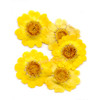 Yellow Daisy Pressed Real Dried Flowers (6 pieces)