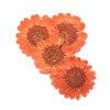 Orange Daisy Pressed Real Dried Flowers (6 pieces)