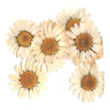 Daisy Flower Pressed Dried Real Flowers (10 pieces)