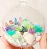 White Seashells (20 pieces) (2-4cm)