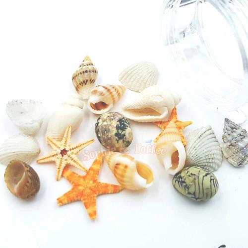 Miniature Seashells - 2 pots