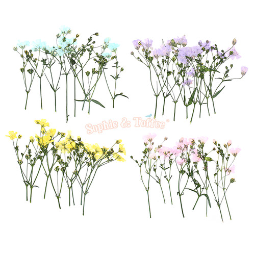 Pastel Colour Baby's Breath Dried Flowers (8 pieces)