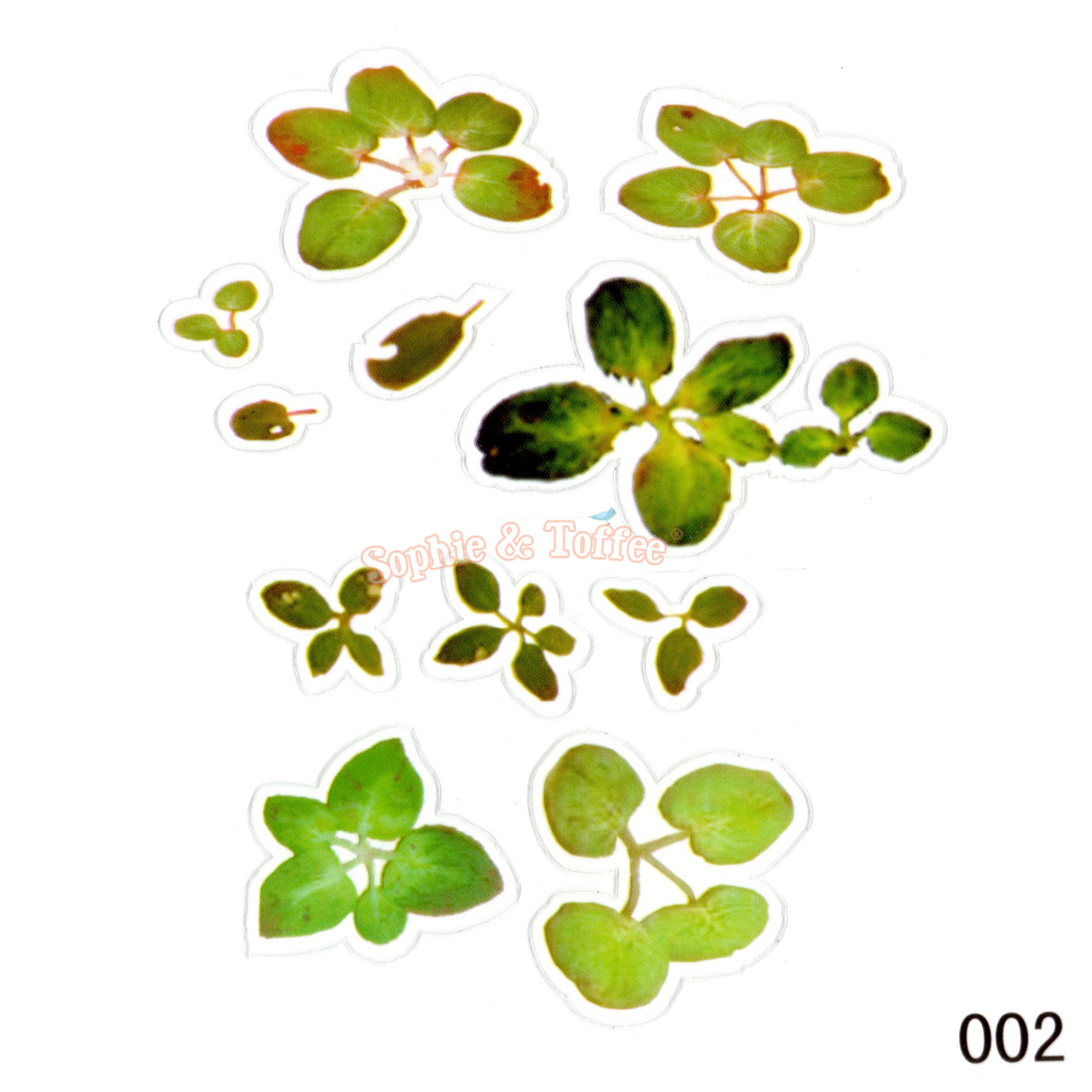 Small Green Leaves Koi Pond Clear 3D Film (3 pieces)