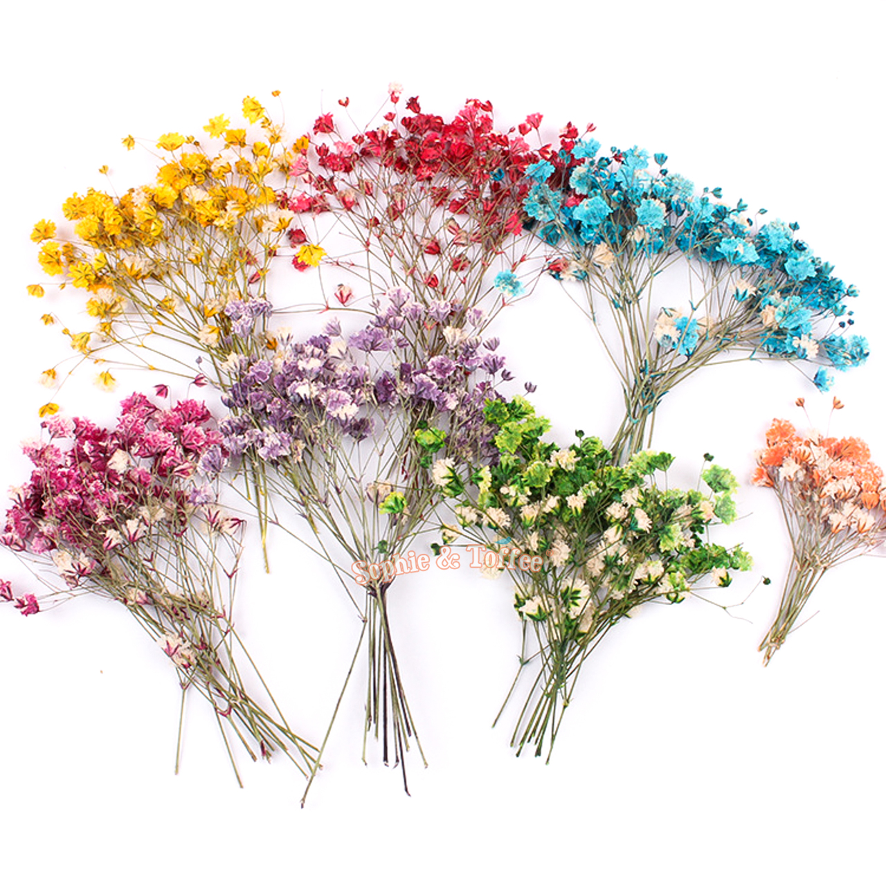 pressed flowers baby breath gypsophila mixed purple white yellow pink