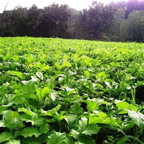 Fall Plot Wheat Pea Mix - Annual