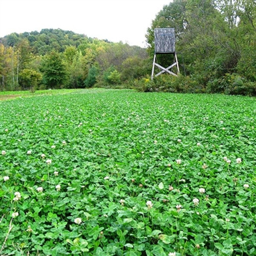 Frontage Clover Blend - Perennial (Coated & Pre-Inoculated)
