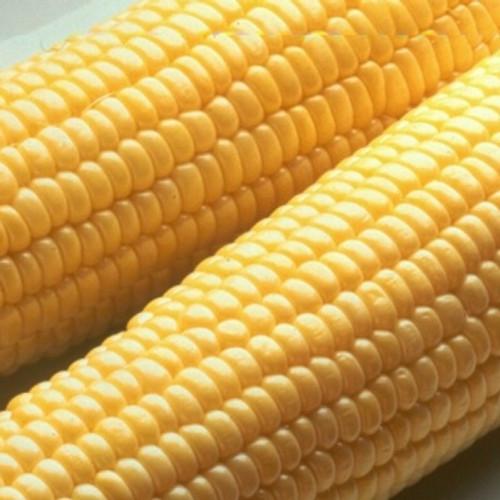 Honey Select Yellow Sweet Corn