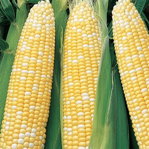 Serendipity Sweet Corn