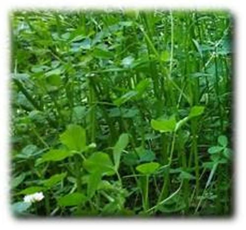 Annual Fixation Balansa Clover Seeds
