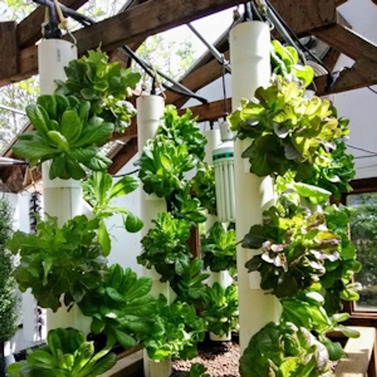Plant Density