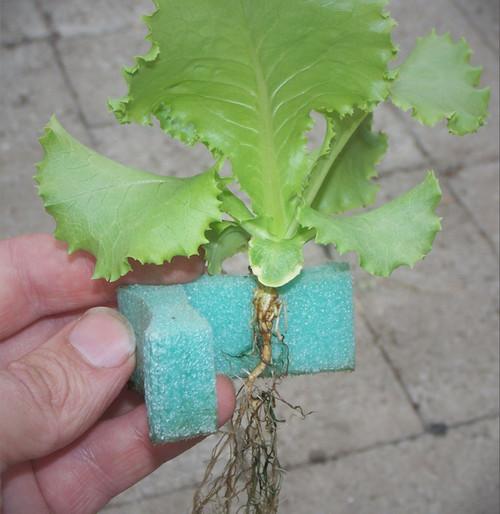 "2"" Grow Grips - (Alternative to Net pots)"