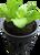 """Seedling starter plug in 2"""" Net Pot"""