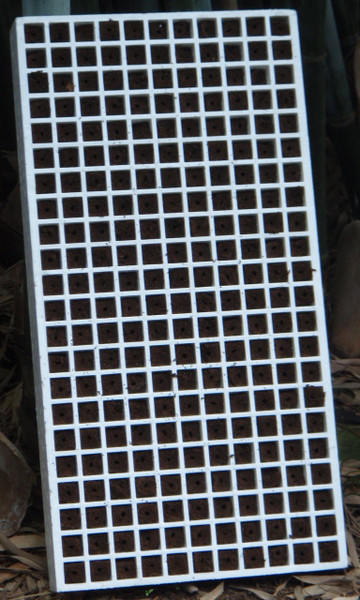 Biodegradable Small Seedling Plug for Beaver Rafts or Media