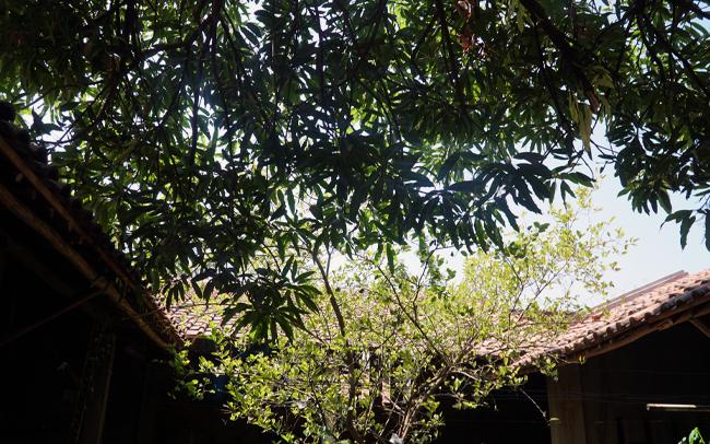 batik-curation-c.jpg