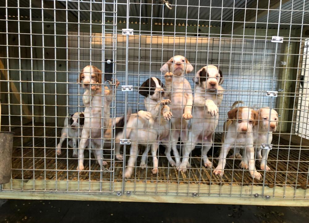 Puppy Floor Grates -  3 Pack