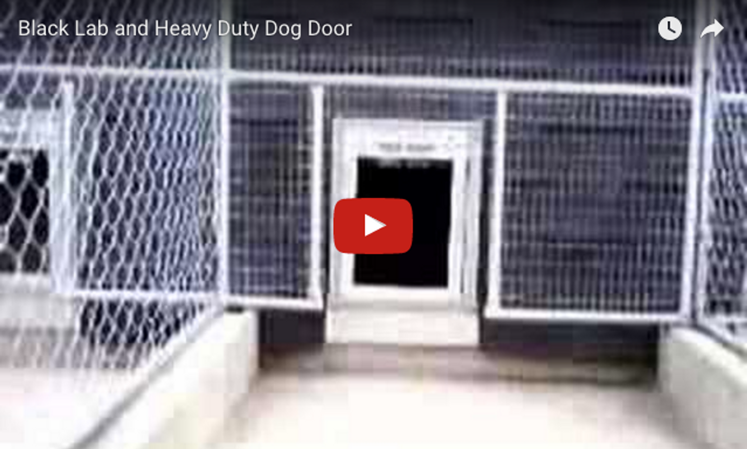 VIDEO: Heavy Duty Dog Door in Action!