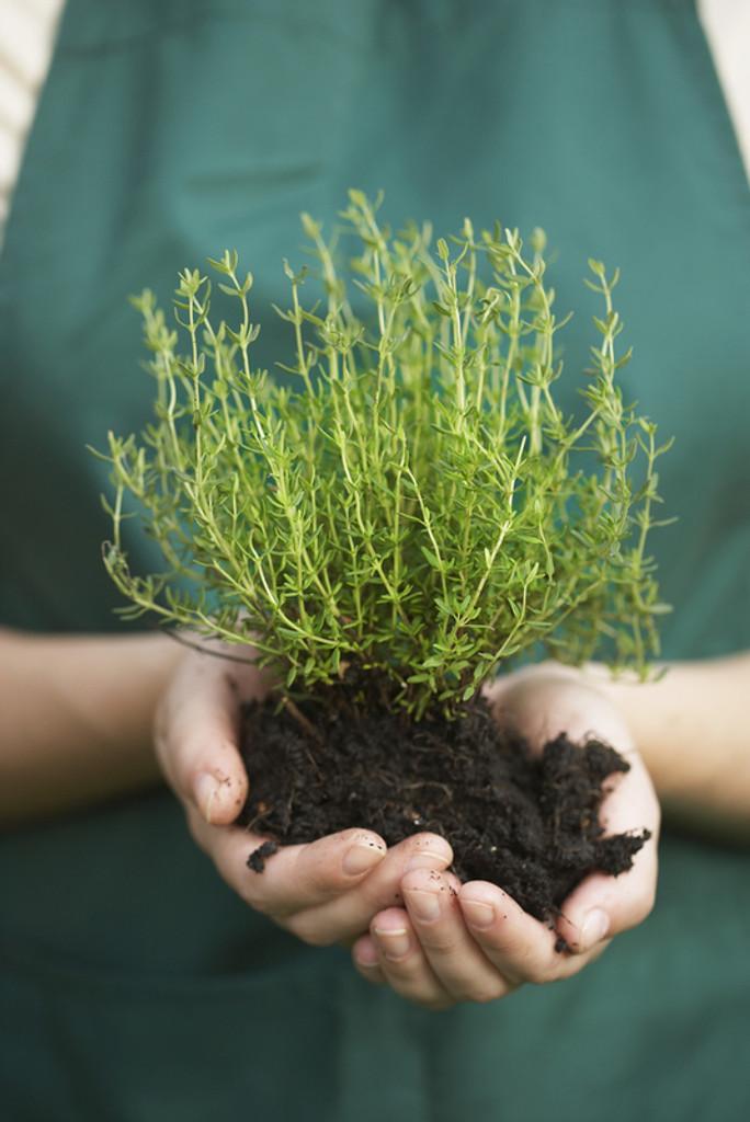 Planting Potting Soil