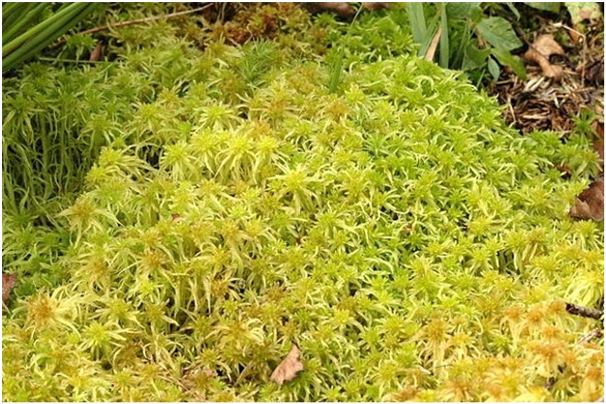 Buy Peat Moss Online Live Moss For Sale