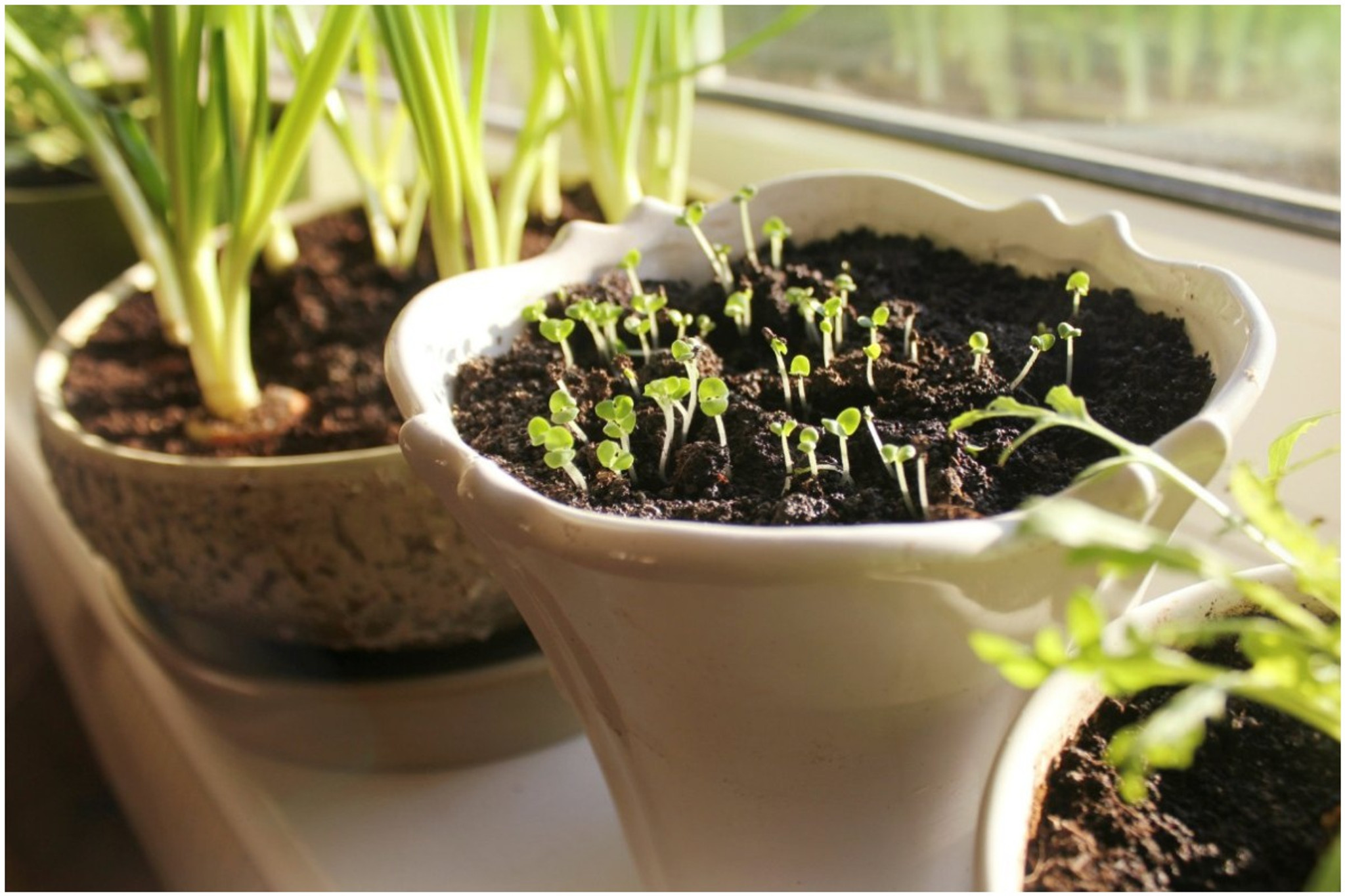 Indoor Gardening Tips from the Experts