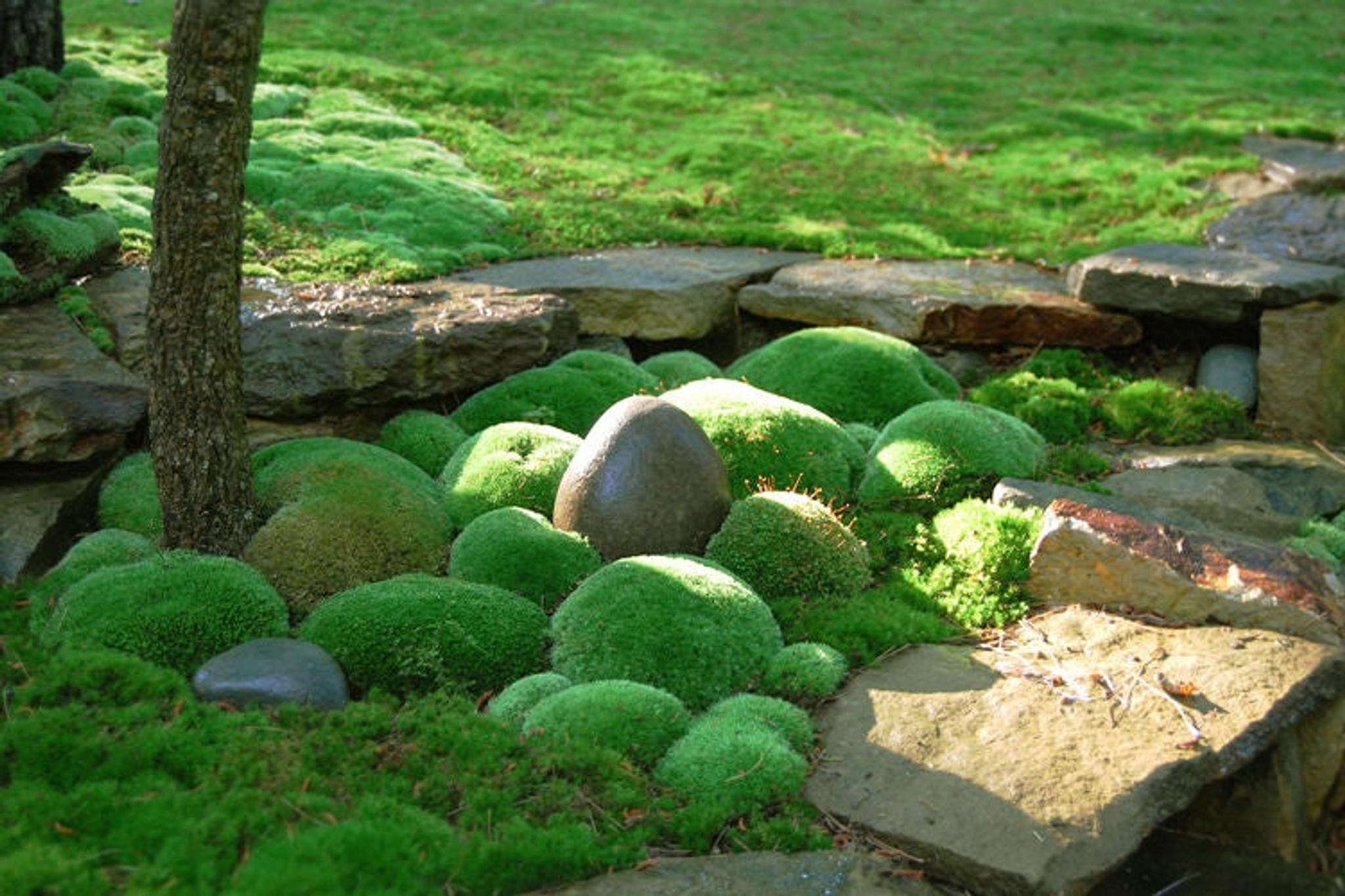 Moss plants add beauty