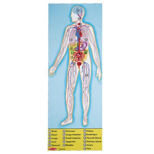 Human Body Floor (100 pc)