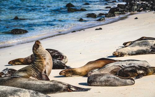 Galapagos Islands, Ecuador - Sea Lion
