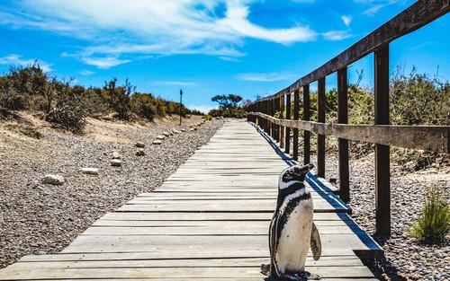 Puerto Madryn, Argentina - Penguin