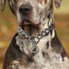Stainless Steel Dog Training Choke Collar - XS/S/M/L