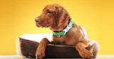 Pet ID Tags Go Beyond Ensuring Your Pet's Safety