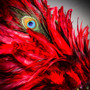 Luxury Traditional Venice Women Carnival Masquerade Venetian Mask with Round Top Feather -  Red