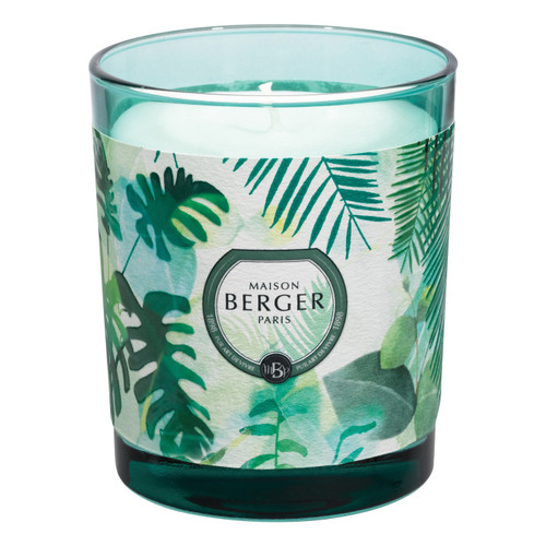 Immersion Green Candle in Fresh Eucalyptus 240g - Maison Berger by Lampe Berger