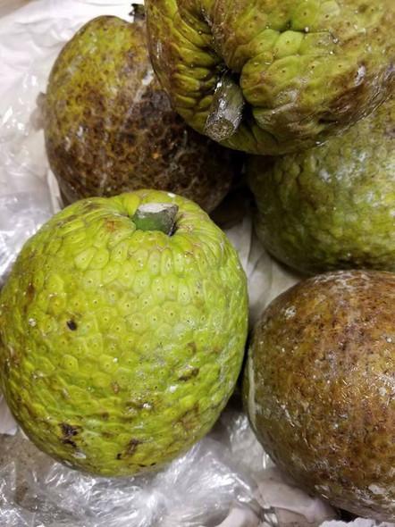 Bread Fruit (ea)