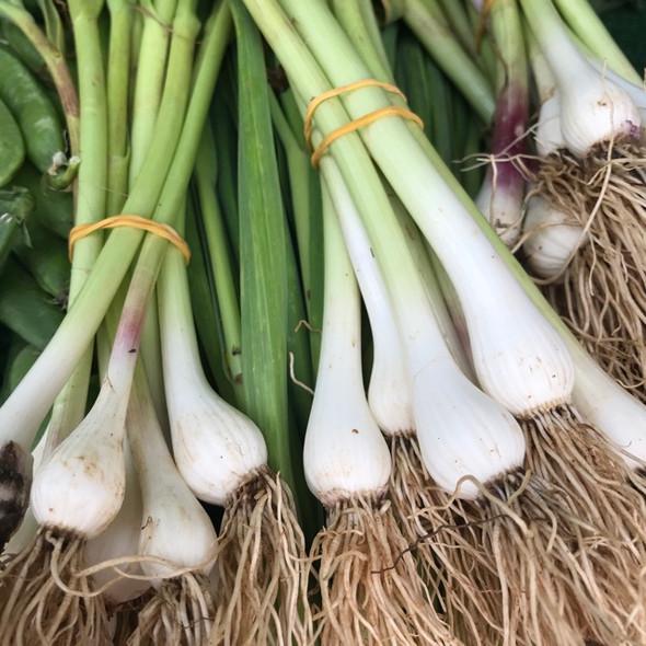 Green Garlic (per lb)