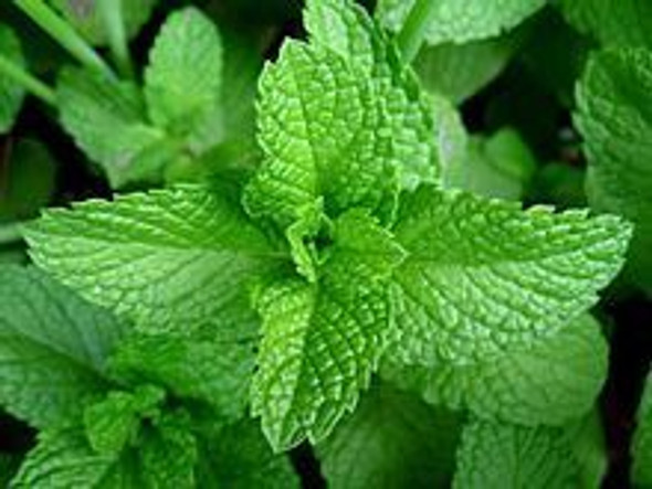 Mint Leaves (per bag)