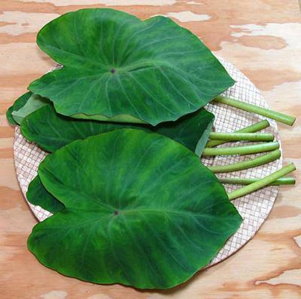 Patra Leaf (per lb)