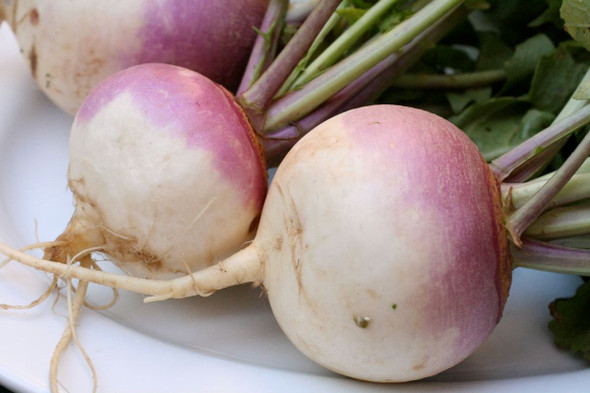 Turnip (lb)