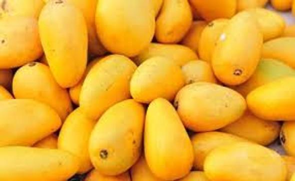 Ataulfo Mango Small 16CT