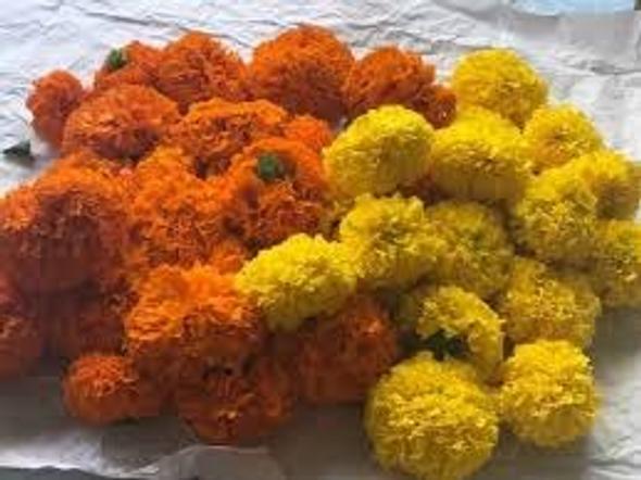 Marigold 100g