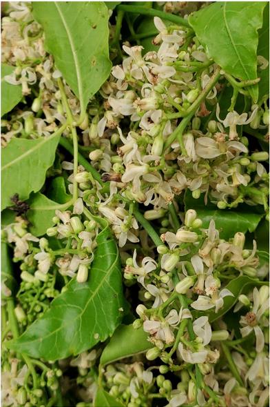 Neem Flowers (per bag)