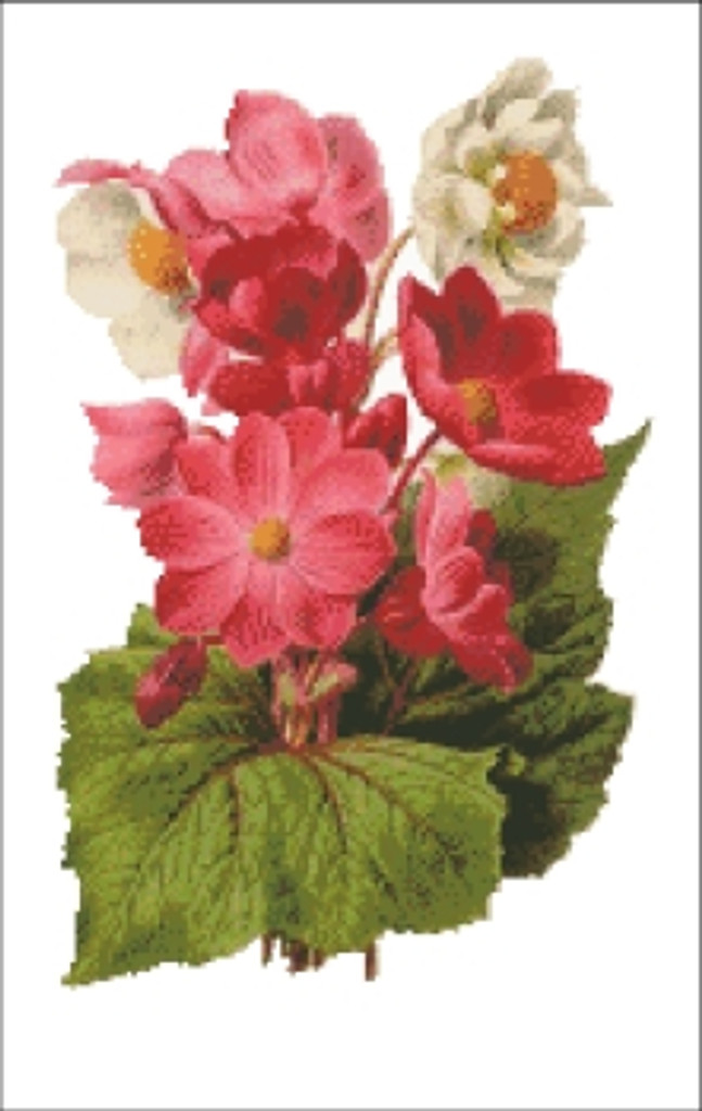 Begonia Flower Cross Stitch Pattern