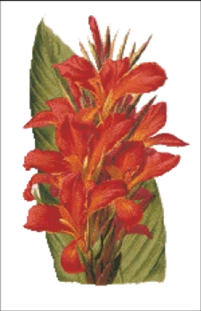 Canna Flower Cross Stitch Pattern
