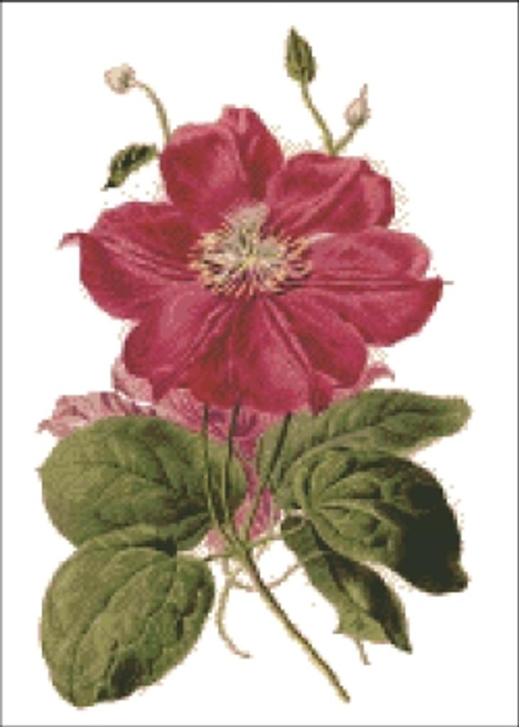 Clematis Flower Cross Stitch Pattern