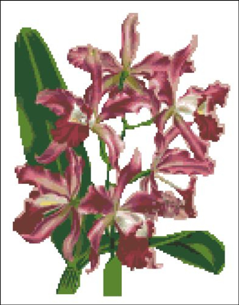 Orchid Pattern 711 (Cattleya Schulziana)