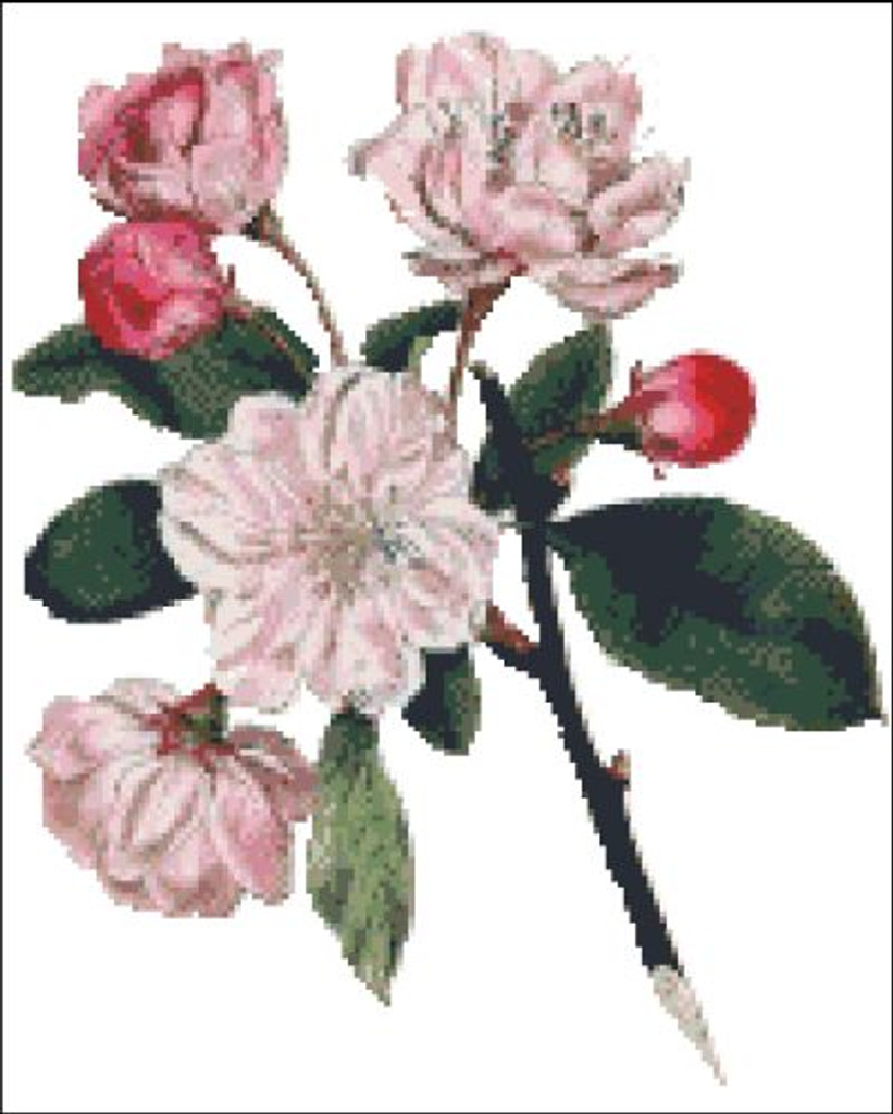 Chinese Apple Tree