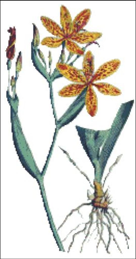 Chinese Ixia