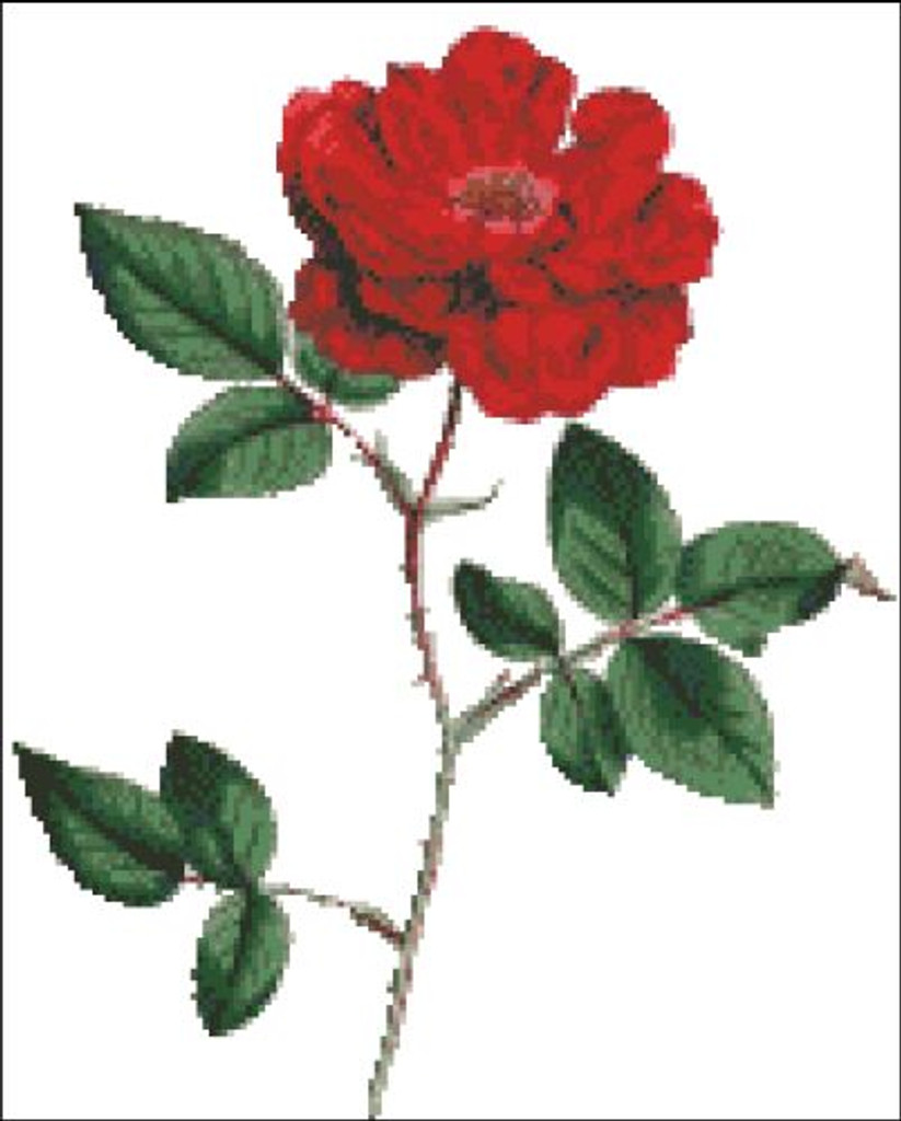 Ever Blowing Rose