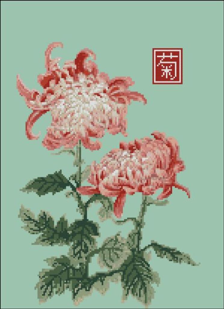 Japanese Chrysanthemum Double Red White