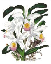 Orchid Pattern 708 (Cattleya Parthenia)