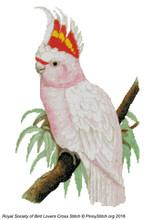 RSBL Cockatoo Leadbeaters